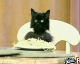 Spaghetti Cat, I love you.